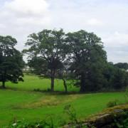 Aberford Rural Fields (2)
