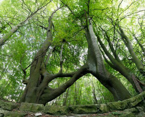 Nellie's Tree